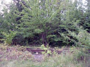 Photo of disused tracks of the Croxley Green branch