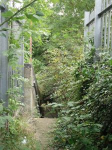 Photograph of disused, overcrown stairs at Watford West