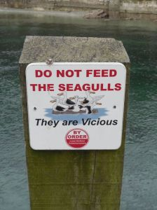"Photo of sign warning ""Do Not Feed The Seagulls - They are Vicious"""