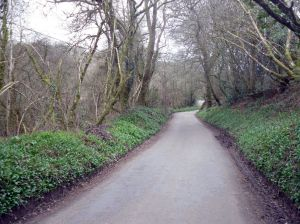 Photo of single track road between St Keyne and Causeland