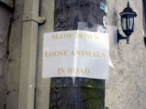 "Photo of faded home-made sign riding ""SLOW DOWN - LOOSE ANIMALS IN ROAD"""